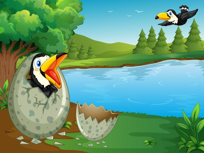 Scène de forêt avec œuf à couver toucan