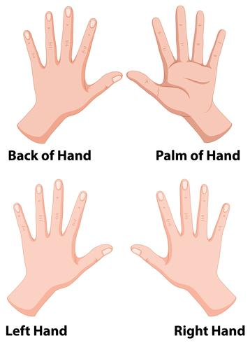 Hands in four positions