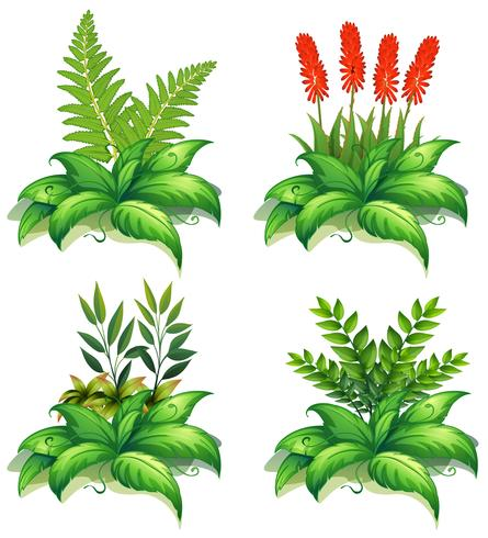 Fyra typer av växter på vit bakgrund