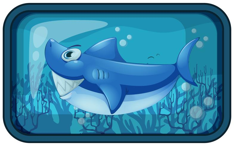 Un tiburón kappy en el acuario