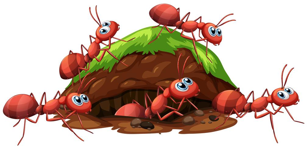 En eldröda myror och hål