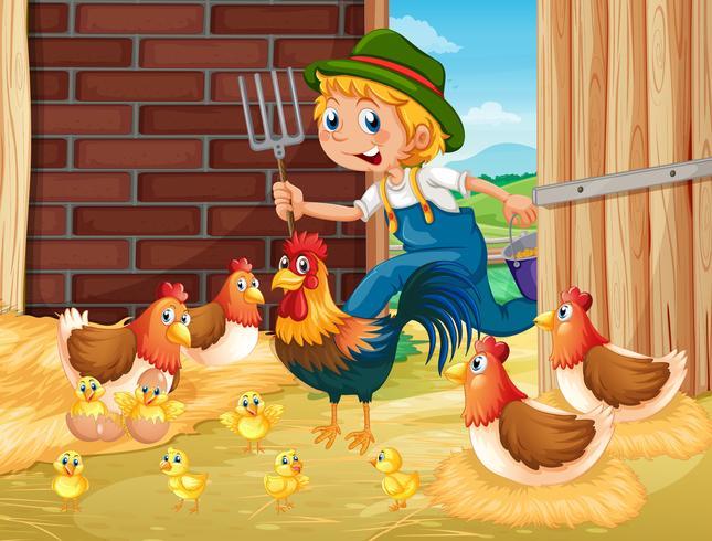 Bonde och kycklingar i ladan