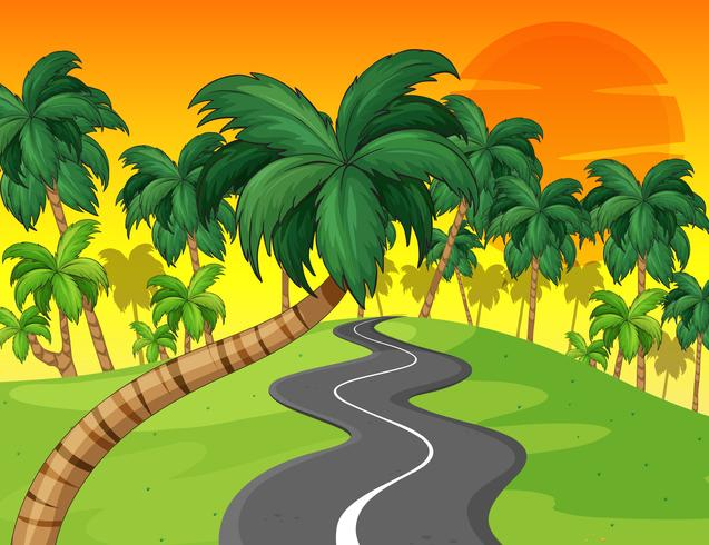 Palm forest and empty road