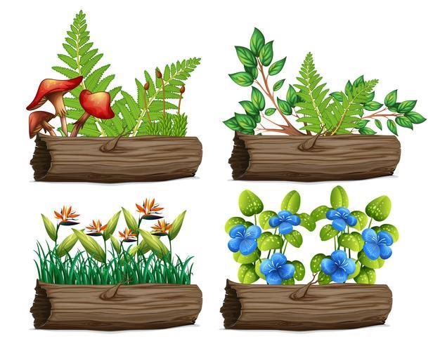 Um conjunto de plantas e madeira