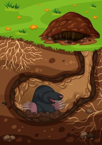 Underground mole in a tunnel