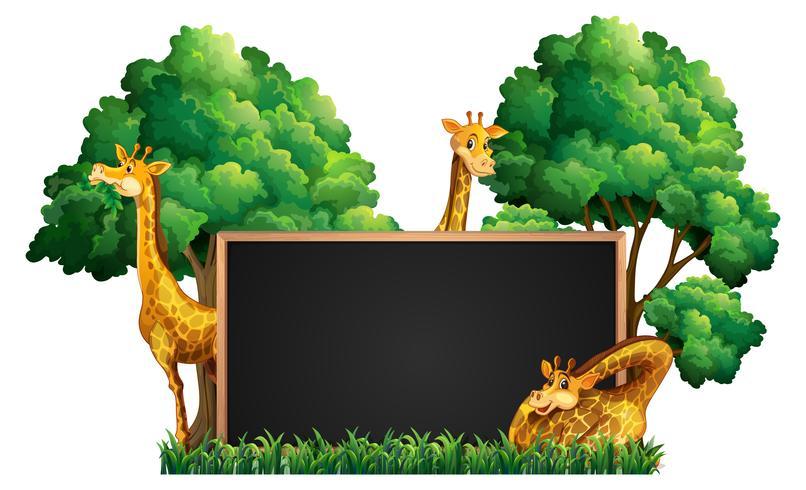 Lavagna con giraffe selvagge nel parco