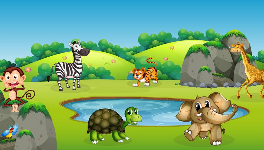 Felizes animais selvagens na floresta