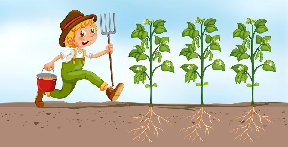 Jordbrukare planterar i fältet