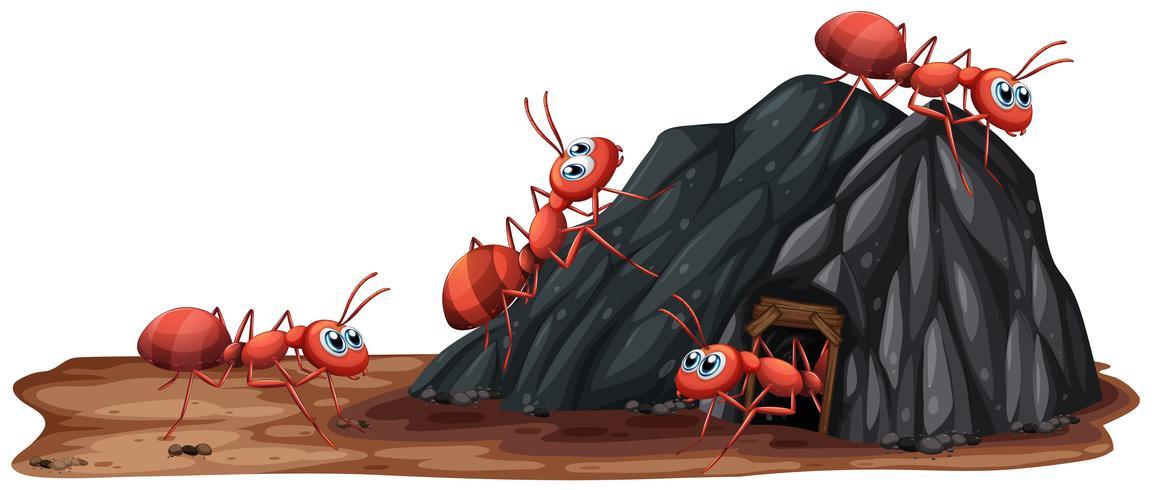 Une famille de fourmis vivant dans un trou