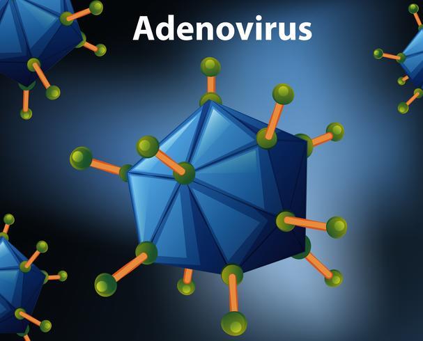 Fechar o diagrama para adenovírus