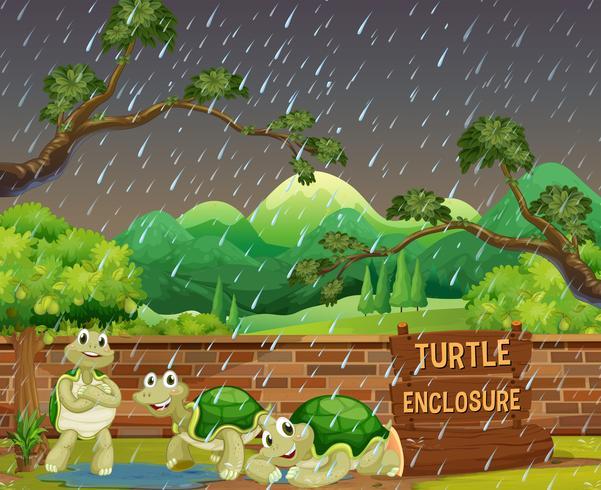 Zoo scen med tre sköldpaddor i regnet