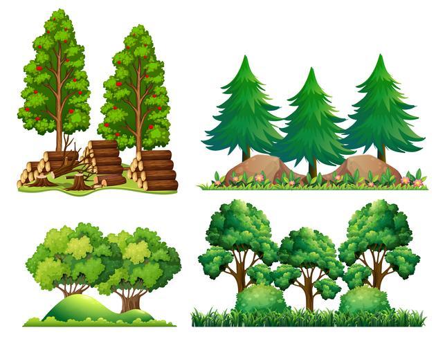 Un ensemble de paysage forestier