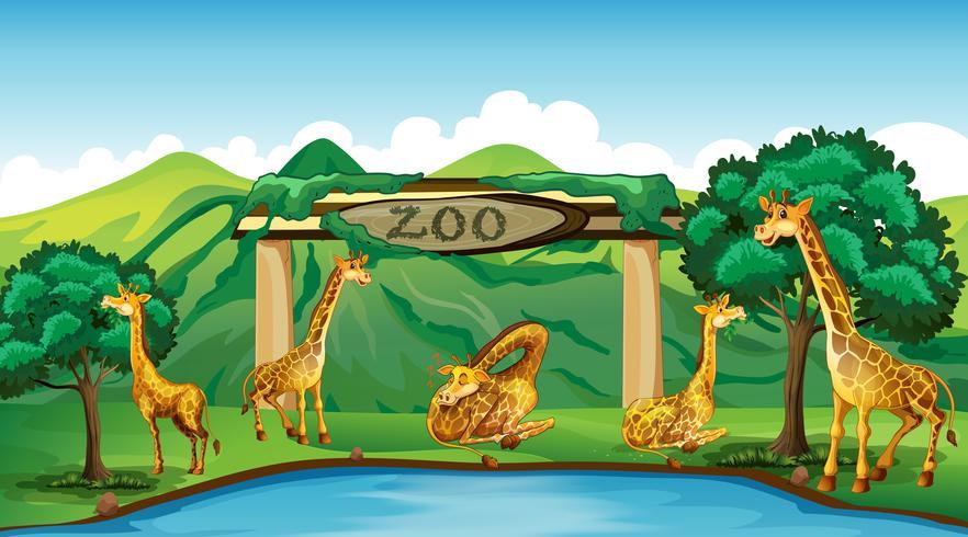 Girafa no zoológico vetor
