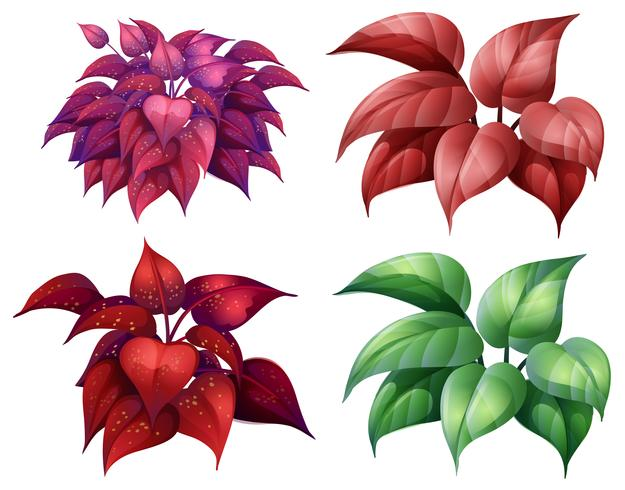 Een reeks van kleurrijke planten