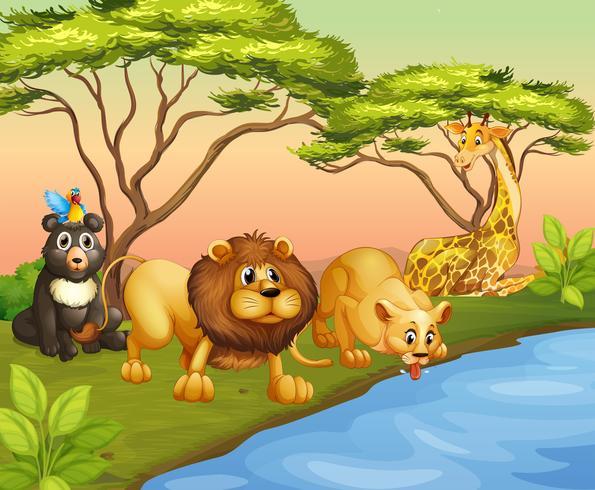 Animais bebendo água do rio