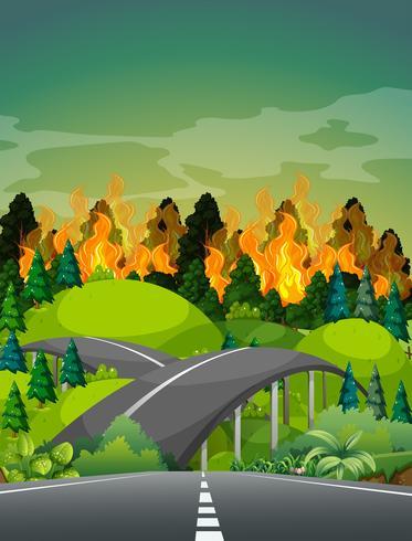 Strada vicino alla foresta wildfire