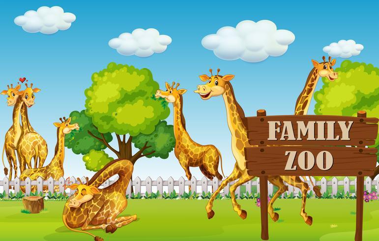 Una familia de jirafas en el zoológico.