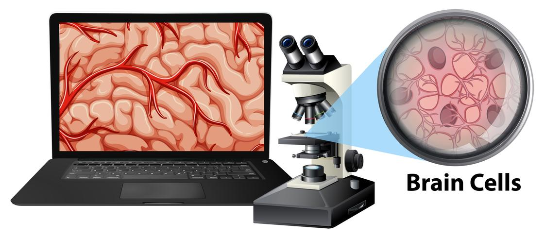 Close up of brain cells with mircoscope and laptop vector