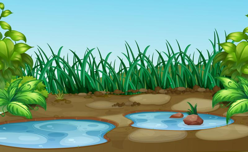 Klein watergat in de natuur
