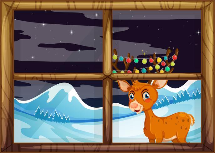 Reindeer behide window concept