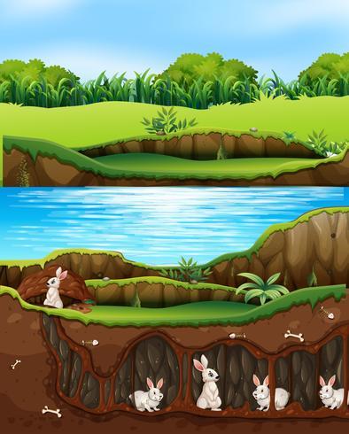 Familia de conejos viviendo en la naturaleza junto al rio.