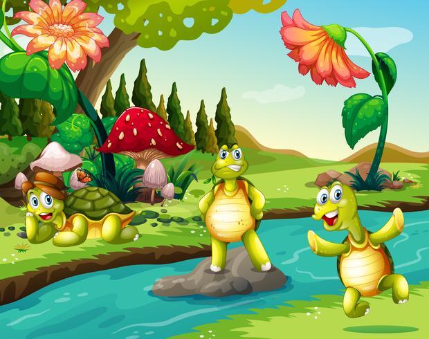 Tre sköldpaddor vid floden