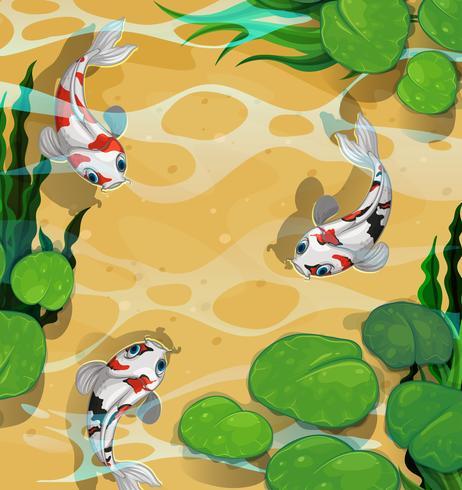 Drie vissen die in de vijver zwemmen