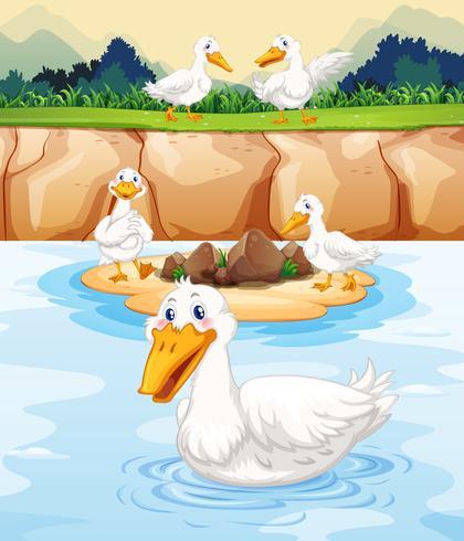 Cinco patos en el estanque