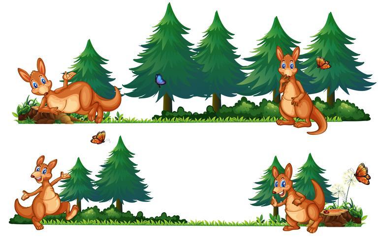 Cangurus na floresta de pinheiros