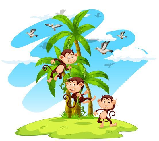 Three monkeys on the island