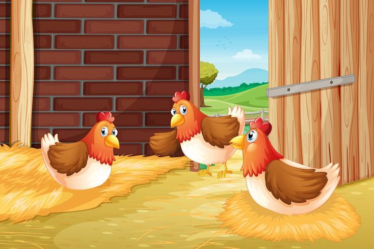 Três ninhos de galinhas