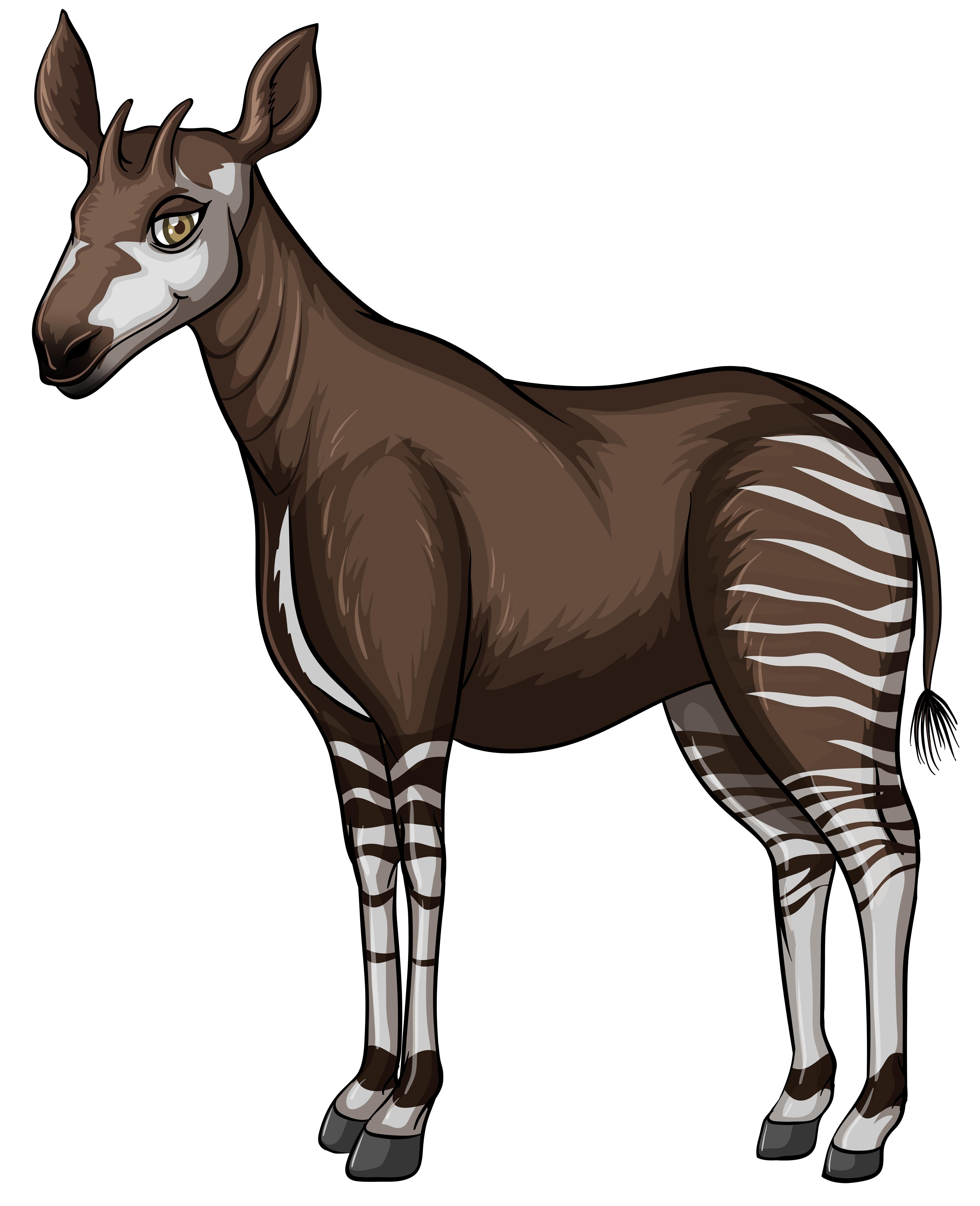 Okapi - Download Free Vectors, Clipart Graphics & Vector Art