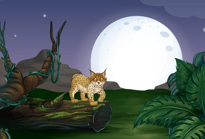 Lynx et forêt