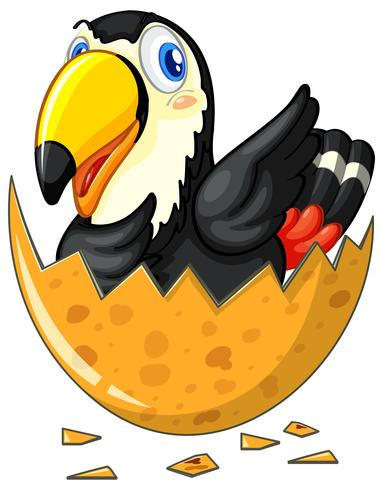 Tukanvogel, der Ei ausbrütet