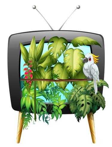 Pássaro arara na selva