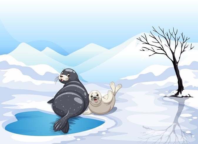 Dos focas sentado en el hielo