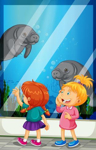 Tjejer tittar på manatee som simmar i tanken