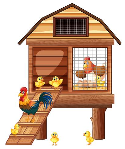 Chicken coop with many chicks
