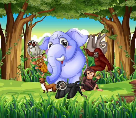 Animales salvajes en la selva. vector