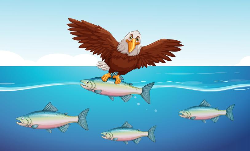 Águila salvaje atrapando peces en el mar