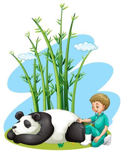 Veterinário verificando panda