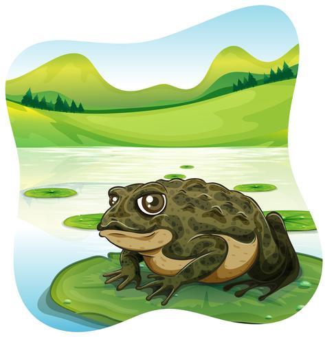 Sapo verde no lírio de água