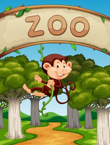 Scimmia che appende sulla vite nello zoo