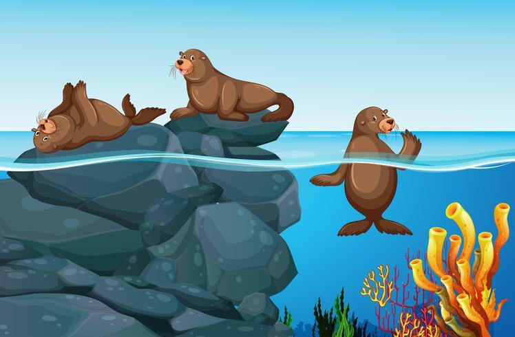 Focas que viven en el mar vector