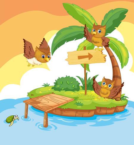 Três corujas voando pela ilha
