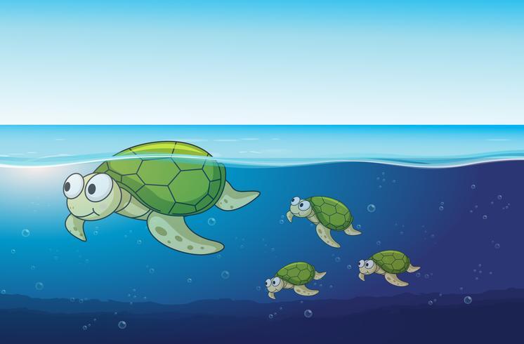Tortues de mer nageant dans l'océan