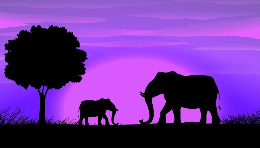 Elefantes da silhueta