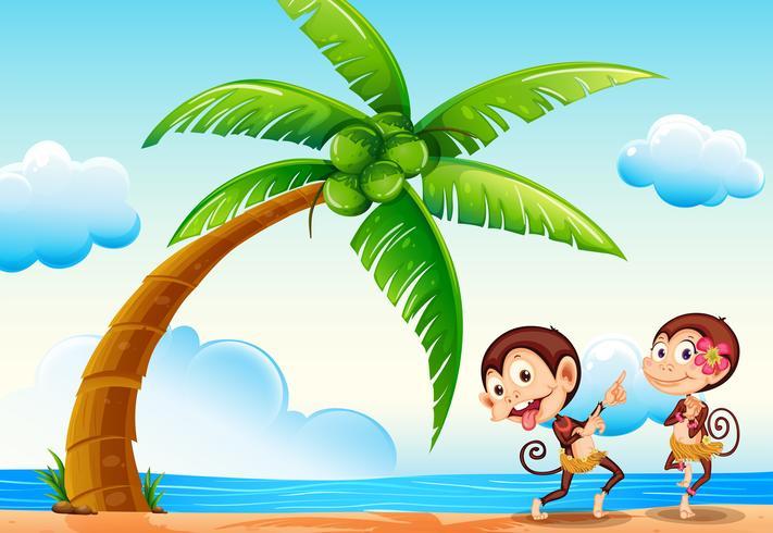 Affen und Strand