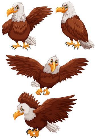 Vier Adler in verschiedenen Aktionen