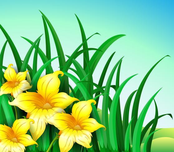 Un jardin sur la colline avec des fleurs jaunes
